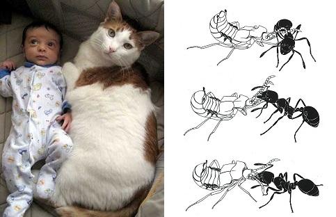 baby_cat_bugs