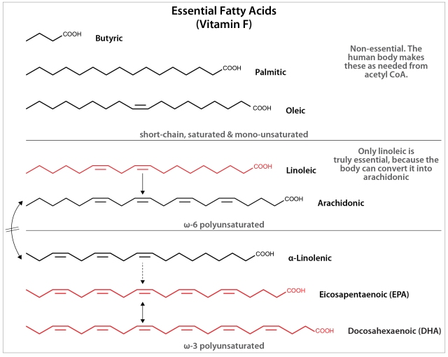There are hundreds of naturally occurring fatty acids, but they can be lumped in three main groups. The first, including Butyric (from butter) Palmitic (from palm oil) and Oleic (from olive oil) are non-essential, and can be built in 2-carbon steps by humans if needed. The second group is the omega-6 polyunsaturates. Of these, Linoleic is required in substantial amounts because of its structural role in the skin. Arachidonic is also essential, but less important because it can be made from Linoleic, and is needed in much smaller amounts to make potent lipid signalling molecules like Prostaglandins. The third group, the omega-3 fatty acids, are the ones most often pitched as supplements. Alpha-linolenic from flax seed oil is the poor man's omega-3. It is cheap, can only be converted by the body into the crucial DHA omega-3 inefficiently, and is mostly burned off for energy. EPA has no specific role of its own, but it is almost always present in fish oils in amounts comparable to DHA and the two are readily interconverted. DHA has crucial structural roles like Linoleate, but the case for DHA being the parent of a potent lipid signalling cascade is much less firm than is the case for arachidonic acid.